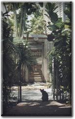 Key West Cat, photograph by Jennifer Miller